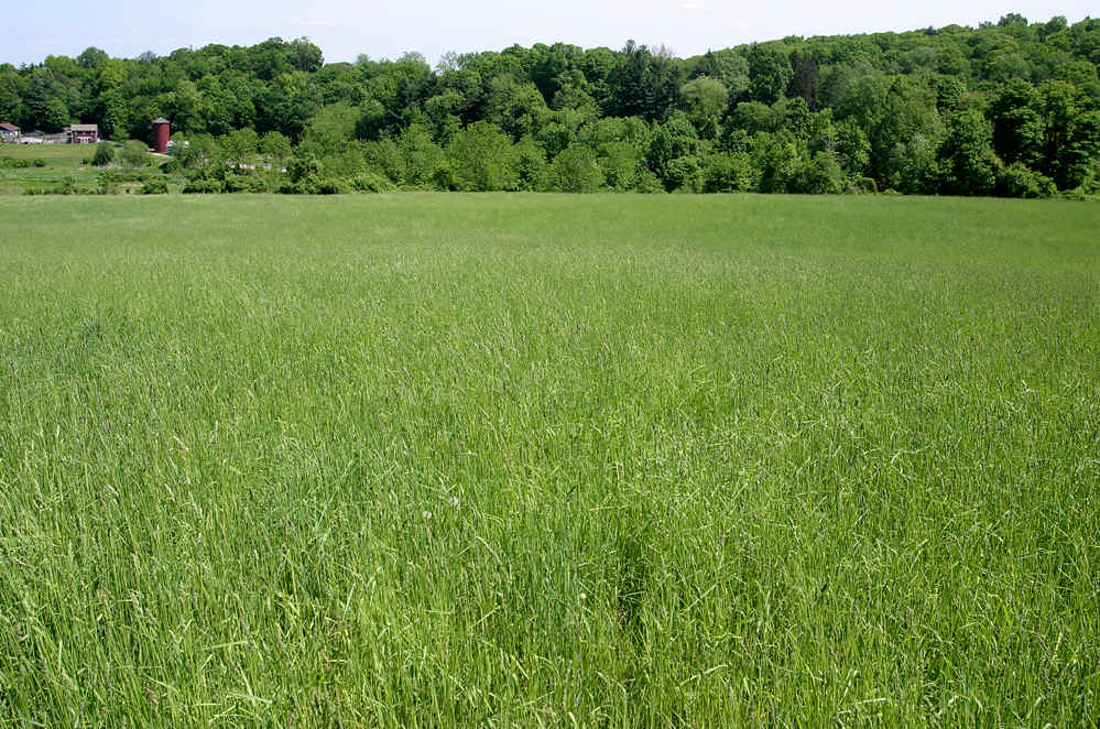 fields and grass - photo #13