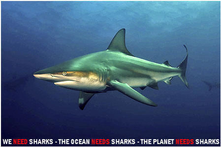 Shark Cage Diving Experts in South Coast Kwazulu-Natal South Africa
